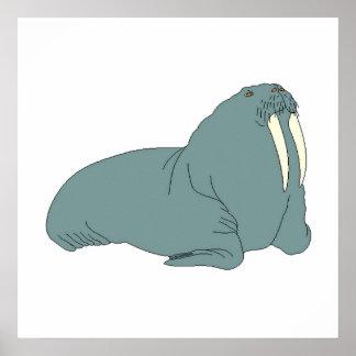 Grey Walrus Posters