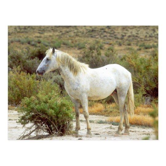 Grey Wild Horse, Rock Springs, Wyoming Postcard