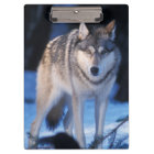 grey wolf, Canis lupus, in the foothills of the 3 Clipboard