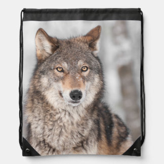 Grey Wolf Canis lupus With One Ear Back Cinch Bags