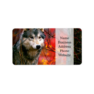 Grey Wolf in Beautiful Red and Yellow Foliage