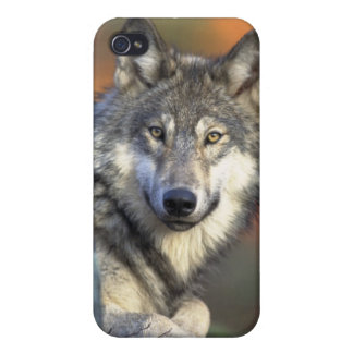 Grey Wolf iPhone 4 Case