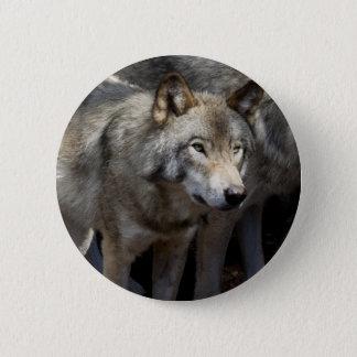 Grey wolf standing 2 inch round button