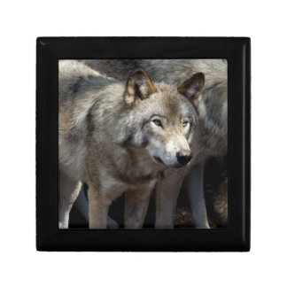 Grey wolf standing gift box