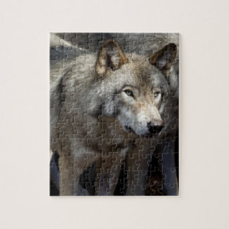 Grey wolf standing jigsaw puzzle