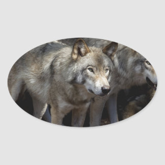 Grey wolf standing oval sticker
