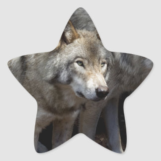 Grey wolf standing star sticker