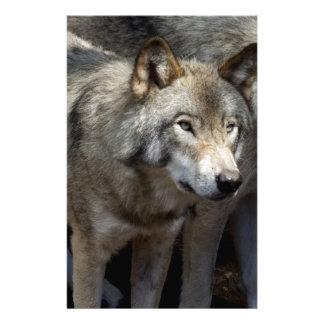 Grey wolf standing stationery