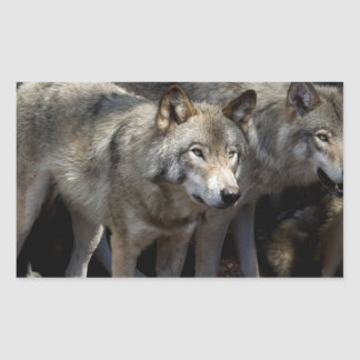 Grey wolf standing sticker