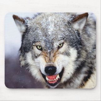 Grey Wolf Teeth Mouse Pad
