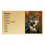 Grey Wolf - Timber Wolf - Red Wolf Series Pack Of Standard Business Cards