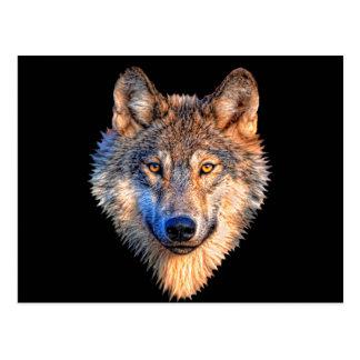 Grey wolf - wolf face postcard