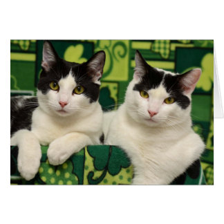 Greyfoot Cat Rescue Black & White Brothers Card