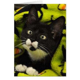 Greyfoot Cat Rescue Bowtie Tuxedo Card