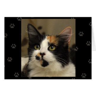 Greyfoot Cat Rescue Calico Greeting Card