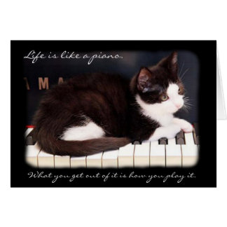 Greyfoot Cat Rescue Life is a Piano Card