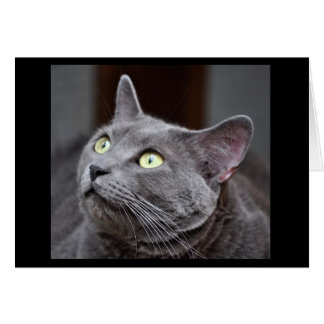 Greyfoot Cat Rescue Russian Blue Greeting Card