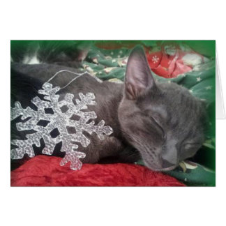 Greyfoot Cat Rescue Russian Blue Holiday Card