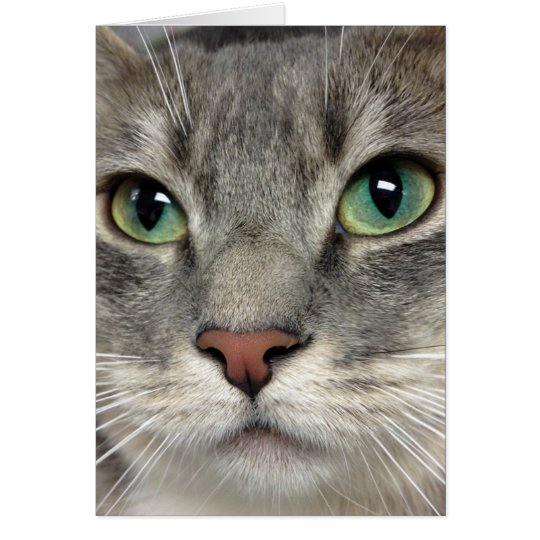 Greyfoot Cat Rescue - Those Eyes - Greeting Card