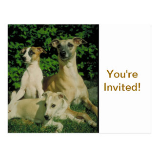 Greyhound and Puppies Postcard