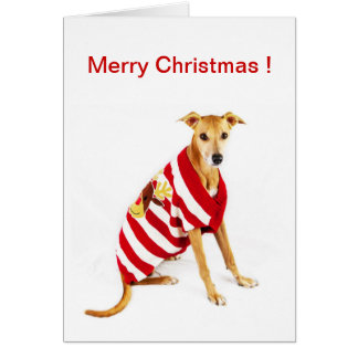 Greyhound in a Christmas Jumper ! Card