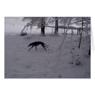 greyhound in the snow card