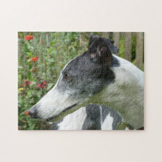 Greyhound jigsaw puzzle (p101)