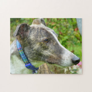 Greyhound jigsaw puzzle (p400) Harley