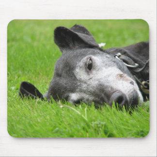Greyhound mouse pad (p218)