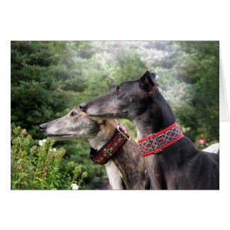 Greyhound on the alert card
