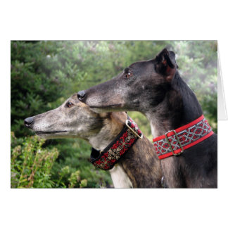 Greyhound photo card (p343)
