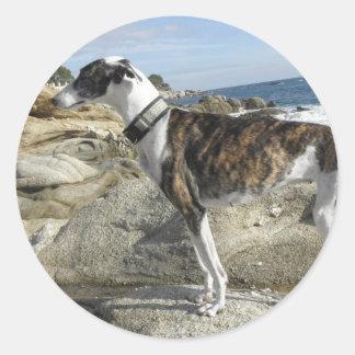 Greyhound Photographs Stickers