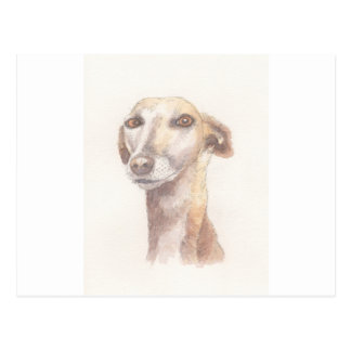 Greyhound portrait postcard