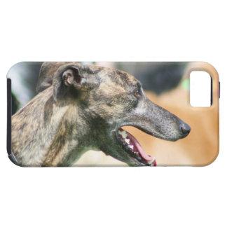 Greyhound Tough Iphone 5 Case