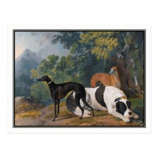 Greyhounds and Mastiff by Sawrey Gilpin Postcard