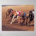 Greyhounds racing on track poster