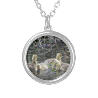 Greylag geese goslings with plants on a lake. silver plated necklace