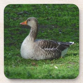 Greylag Goose, Anser anser, Graugans Drink Coaster