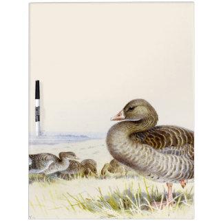 Greylag Goose Birds Wildlife Dry Erase Board