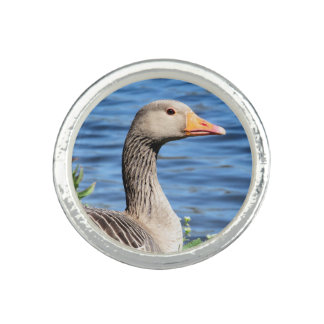 Greylag Goose Photo Ring