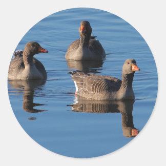 Greylag Goose Trio Round Sticker