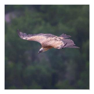 Griffon vulture, France Card