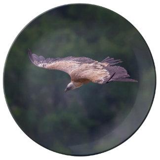 Griffon vulture, France Plate
