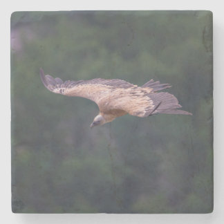 Griffon vulture, France Stone Coaster