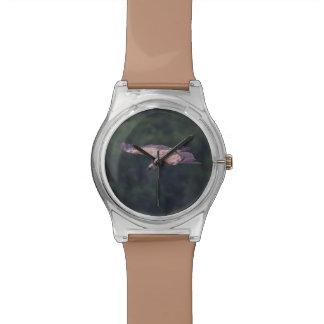 Griffon vulture, France Watch