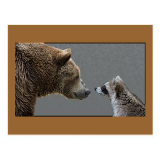 Grizzle Bear Meets Raccoon Postcard