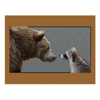 Grizzle Bear Meets Raccoon Postcard