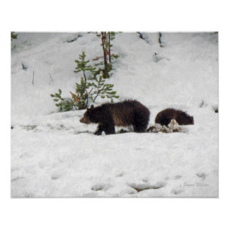 Grizzlies in the Snow Poster Print