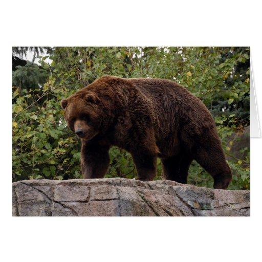 Grizzly Bear-002 Card