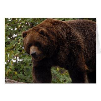 Grizzly Bear-005 Card